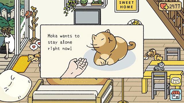 Chăm sóc mèotrong Adorable Home