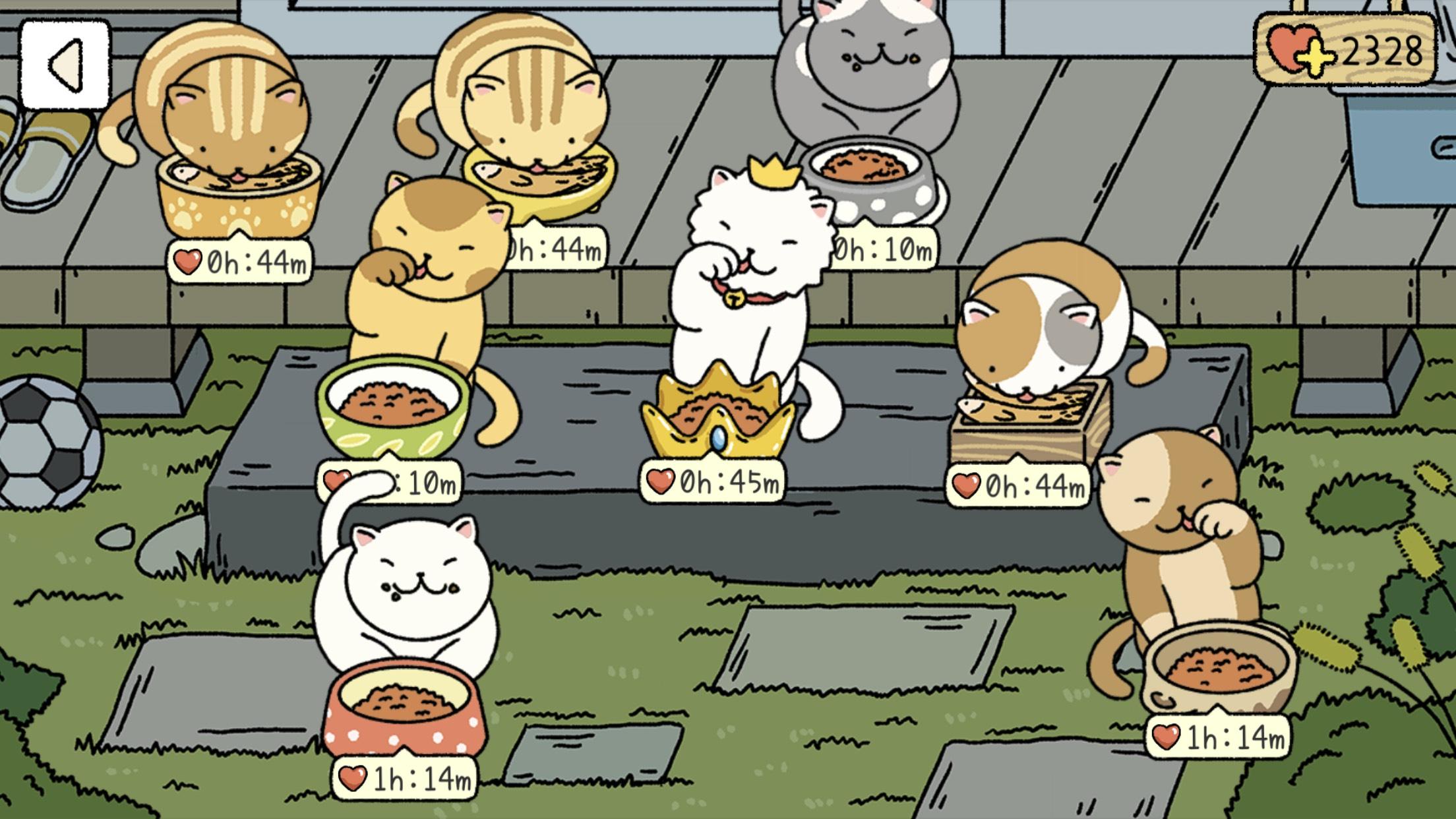 Chỗ cho mèo ăn