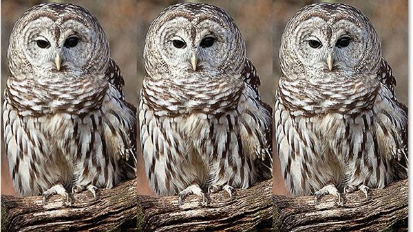 Cách tăng độ nét của ảnh bằng Photoshop CS6 - Khử răng cưa